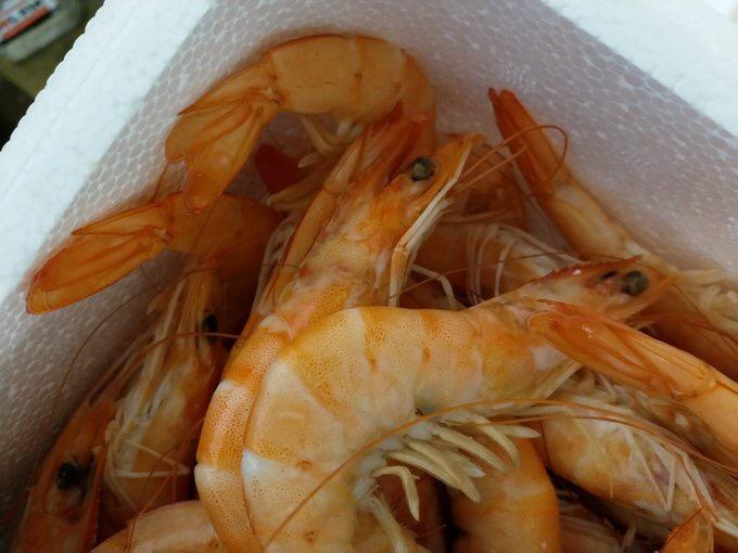 Prawns And Shrimps