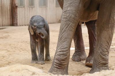 Elefant 3.jpg