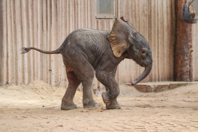 Elefant 2.jpg