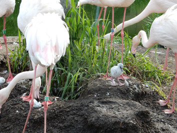 Rosa Flamingo.jpg