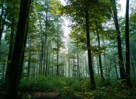 森林野火肆虐 人員傷亡、財產損失 哪些保險可供保障?