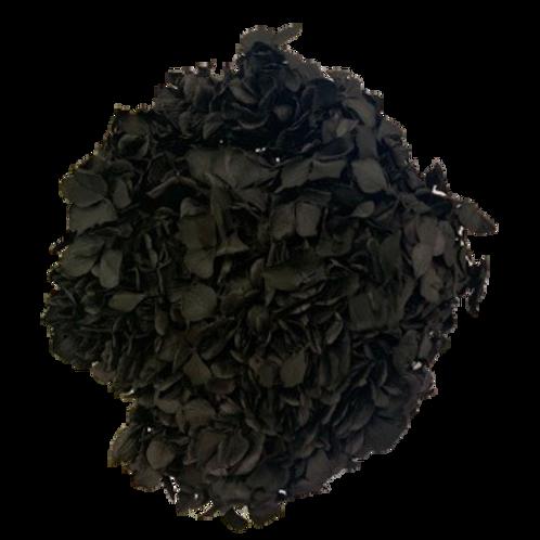 HORTENSIA STABILISÉ NOIR (x1)