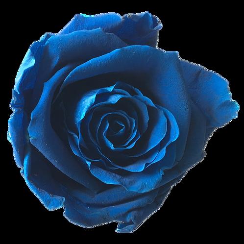 ROSE STABILISÉE 63MM - BLEUE ROI (x6)