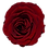 Thumbnail: ROSE STABILISÉE 63MM - ROUGE BURGUNDY (x6)