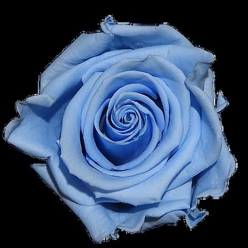 ROSE STABILISÉE 63MM - BLEUE CIEL (x6)