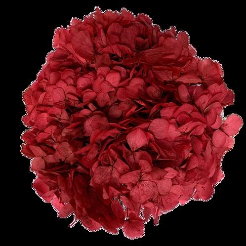 HORTENSIA STABILISÉ ROUGE (x1)