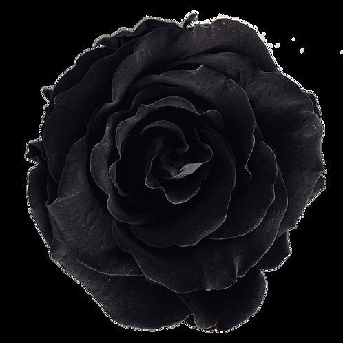 ROSE STABILISÉE 63MM - NOIRE (x6)