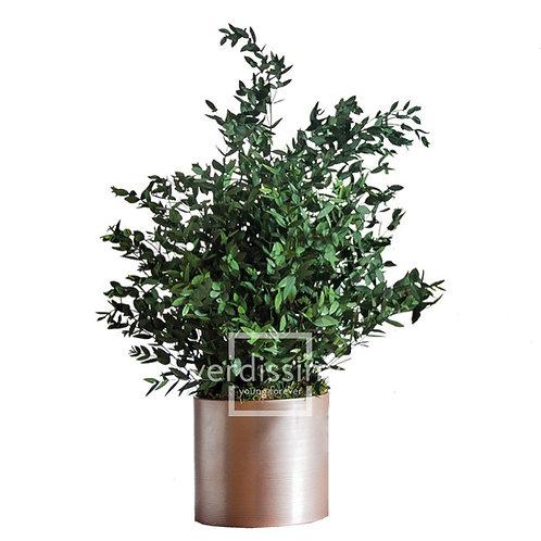 PARVIFOLIA PLANT STABILISÉ - VERT
