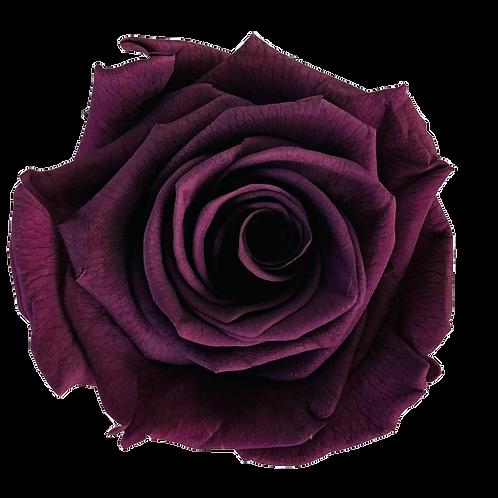 ROSE STABILISÉE 63MM - PURPLE (x6)
