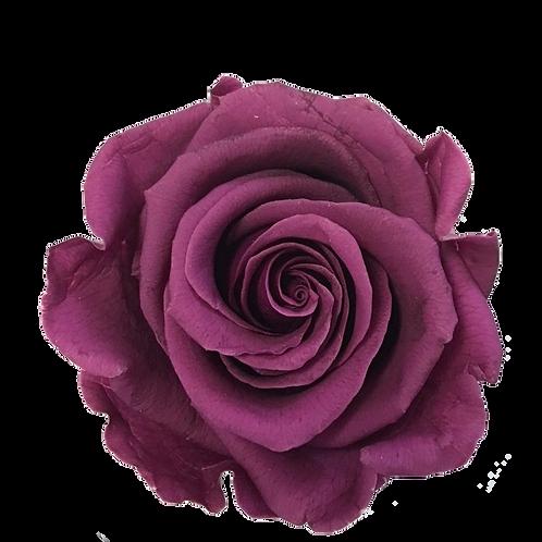 ROSE STABILISÉE 63MM - MAUVE (x6)