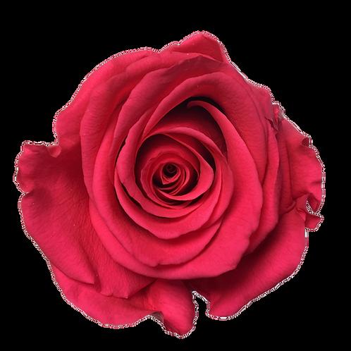 ROSE STABILISÉE 63MM - ROSE (x6)