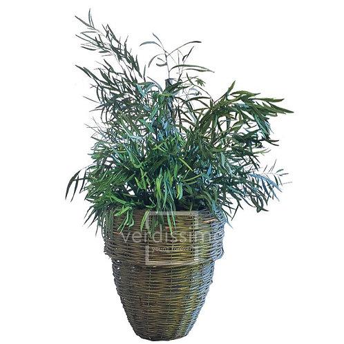 NICOLY PLANT STABILISÉ - VERT