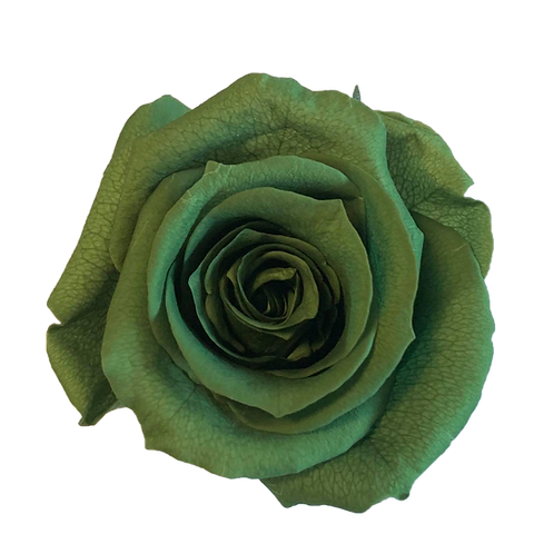 ROSE STABILISÉE 63MM - VERTE TEA (x6)
