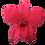 Thumbnail: ORCHIDÉE STABILISÉE ROSE (x5)