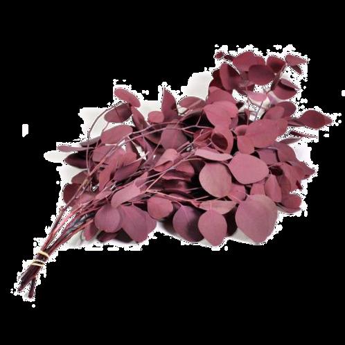 EUCALYPTUS POPULUS STABILISÉ - ROUGE (PAQUET)