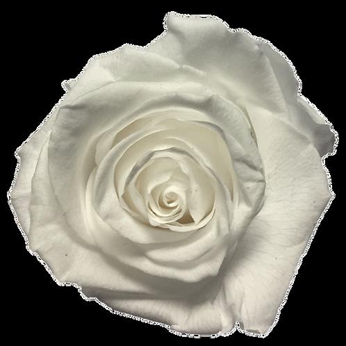 ROSE STABILISÉE 63MM - BLANCHE (x6)