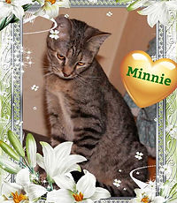 Minnie- Kitten for Adoption in Williamsport, MD