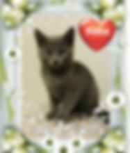Princess -Kitten for Adoption in Williamsport, MD