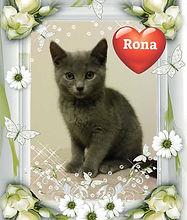 Princess -Kitten for Adoption in Williamsport, MD