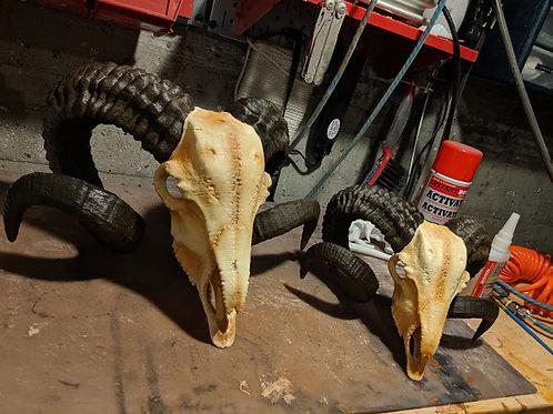 Ram Skull 003