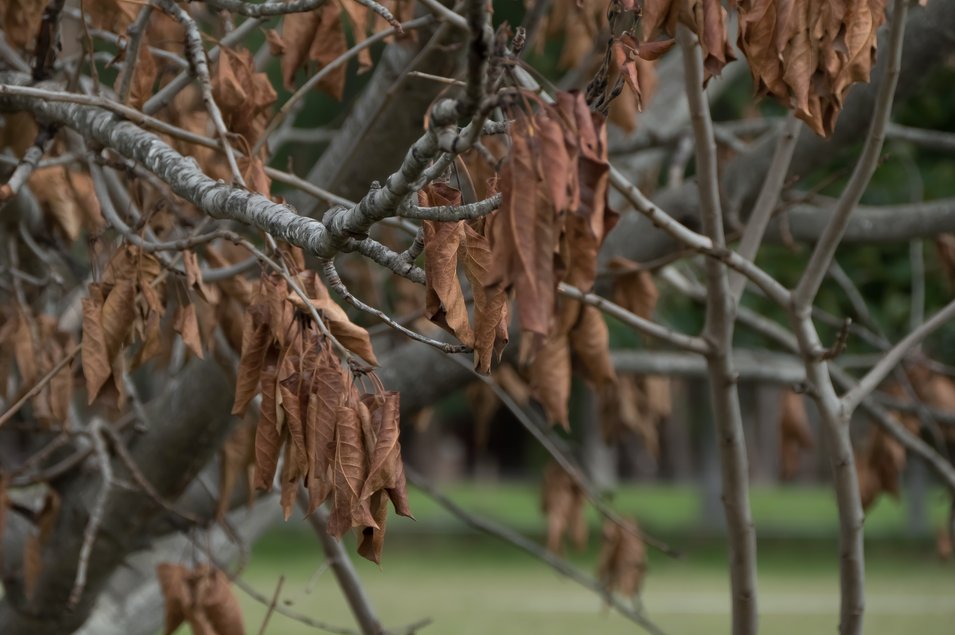 Autum leaves