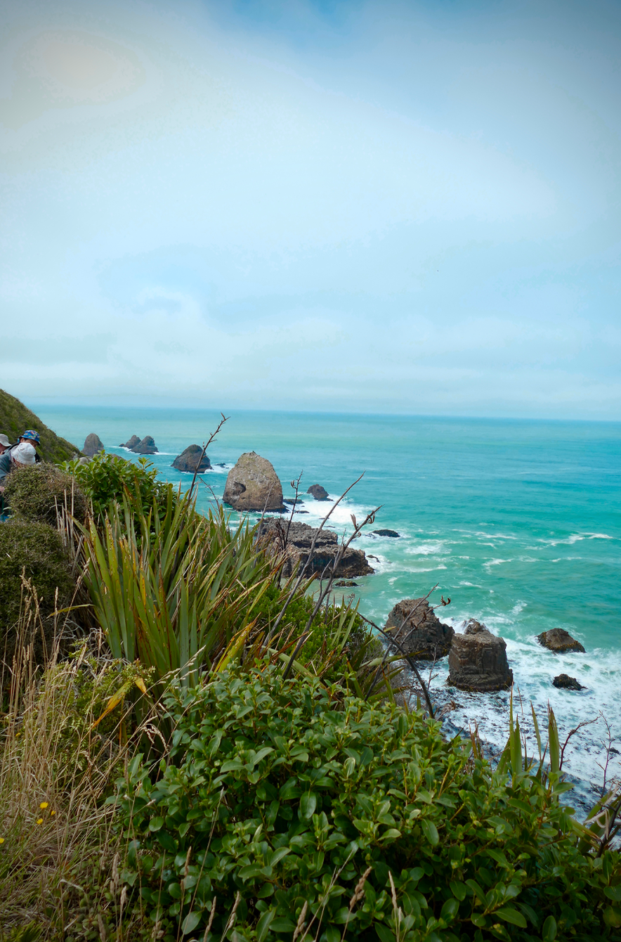 Kaka Point NZ