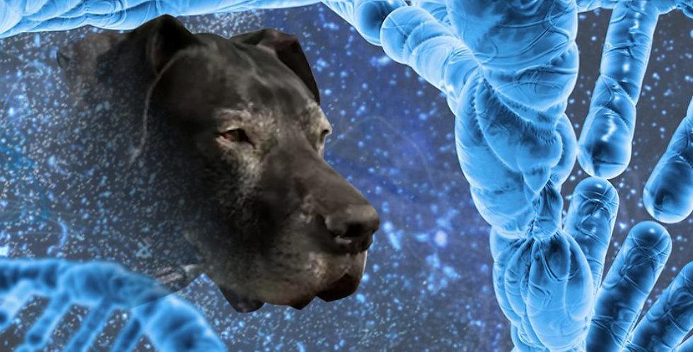Suplemento Canino: Mejora su organismo y articulaciones