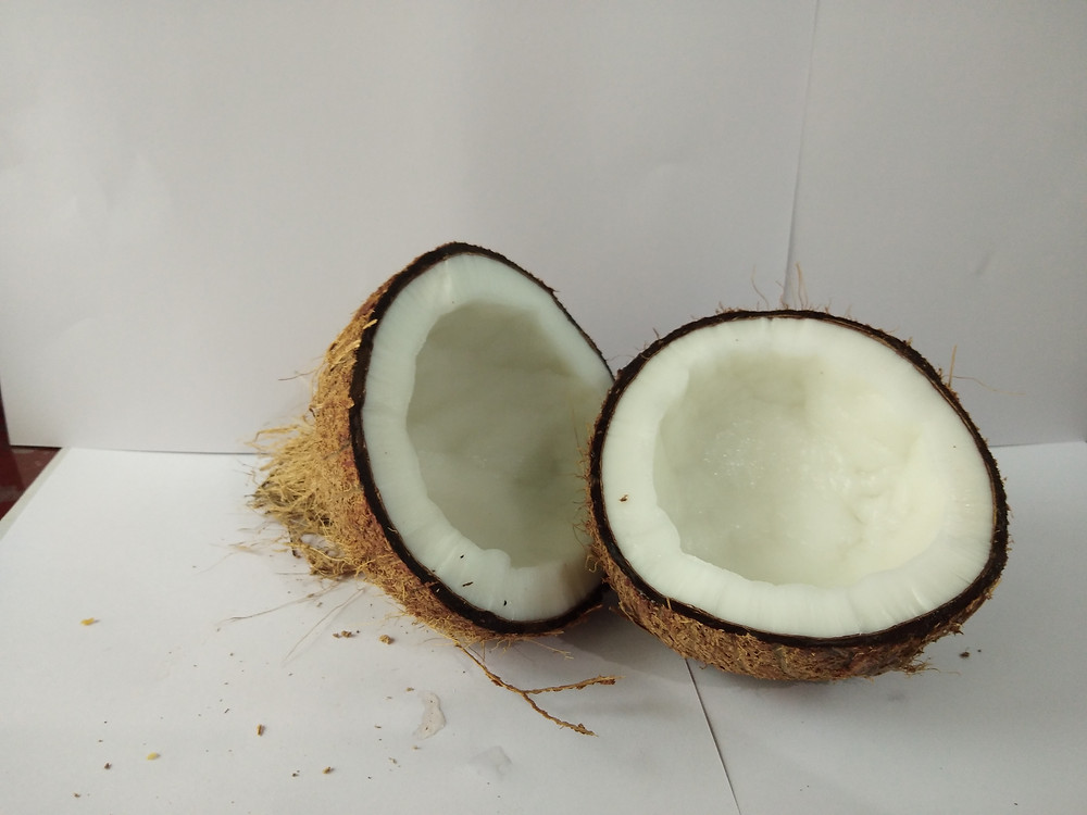 TRANSION EXPORT offers the best quality fresh semi husked coconuts