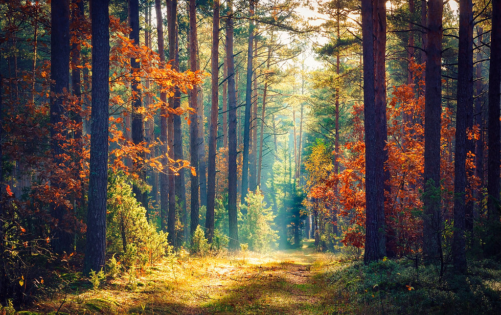 Autumn forest nature. Vivid morning in colorful forest with sun rays through branches of t