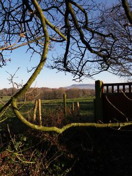 Tolkien Trail