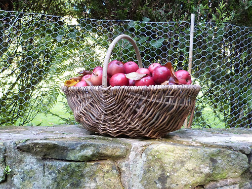Fabulous Wicker Trug - Foraging basket