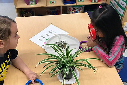 Students at Z075 learned all about plant