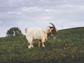 Walk Away From The Goatlife - Choose a Life of Significance