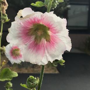 Flower from Gardens