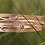 Thumbnail: GRASSES Gold and Gemstone Bracelet