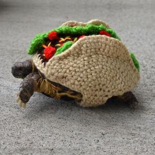 Taco Meets Turtle