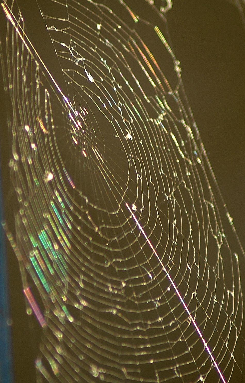 Web 0.0