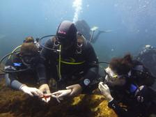 Beginners, Catania Diving