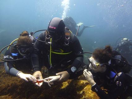 Diving Catania