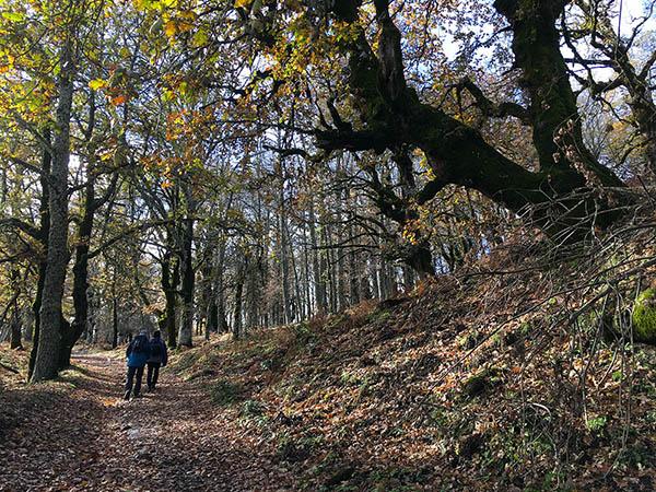 Malabotta Woods, Walking in Sicily