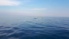 Dolphin Tour in Sicily