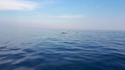 Avvistamento Delfini, Escursioni in barca Catania