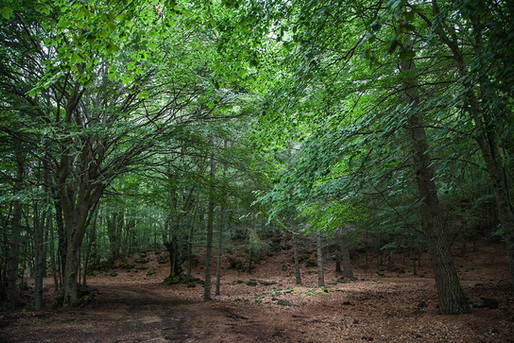 Walking into the woods, Etna Trek