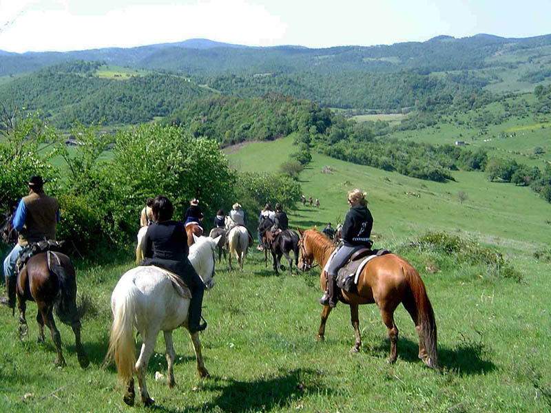 Forest in Pollina, Horse Excursions