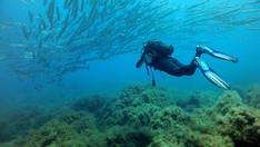 Banco di pesci, Immersioni Sicilia