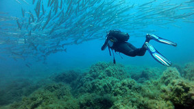 Swimming between fishes shoal