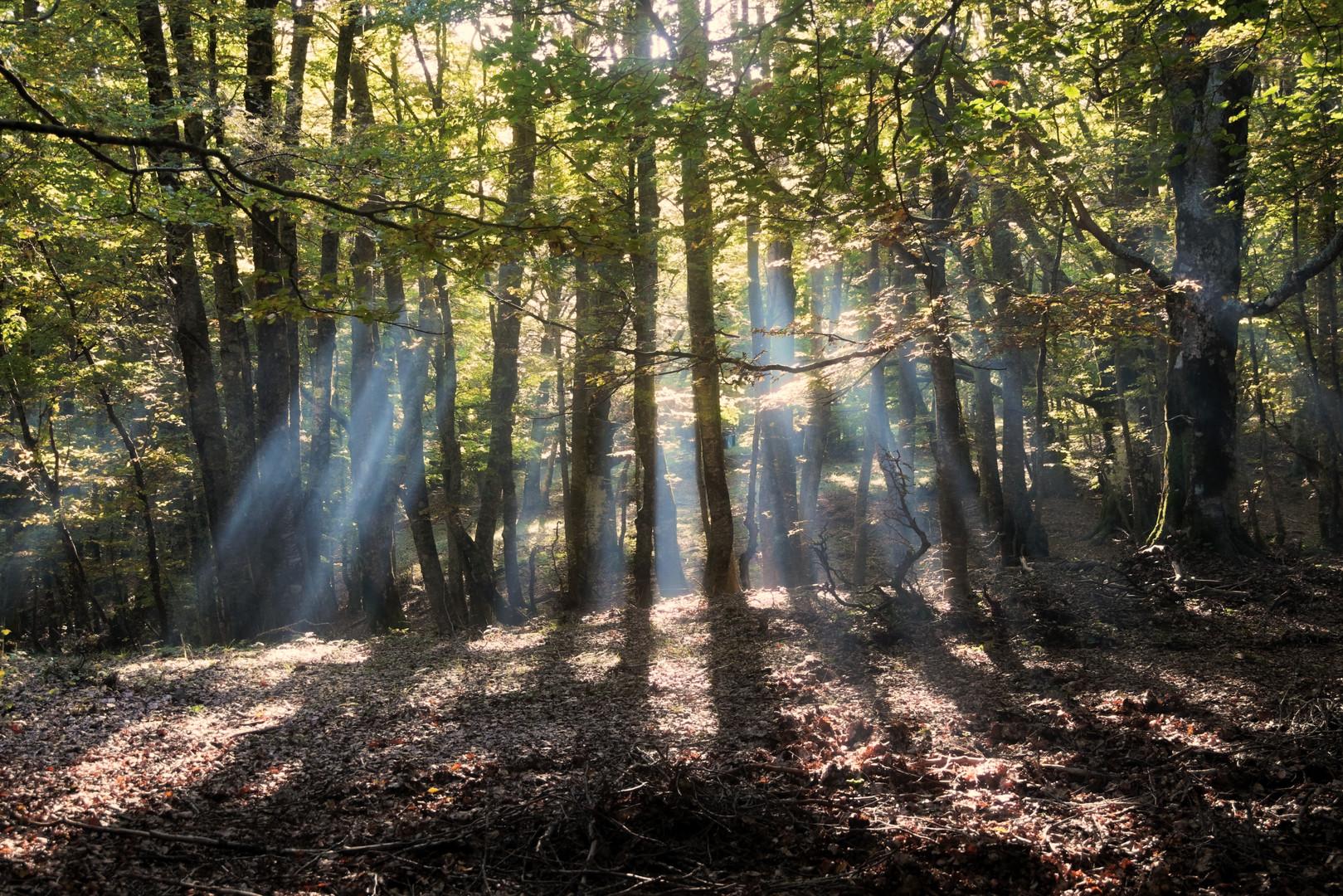 Nel Bosco, Trekking Nebrodi