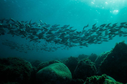 Fishes shoal