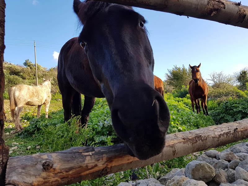 Escursioni a Cavallo Agrigento