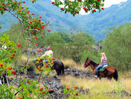 Along the path, Horse Excursions